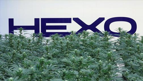 Акции HEXO продолжают рост