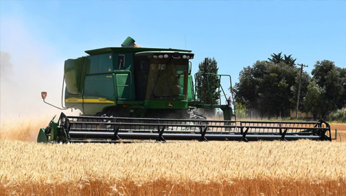 Перспективы компании Don Agro в связи с ростом цен на пшеницу