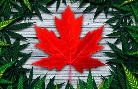 Инвестиции в сектор канадских «экологов»